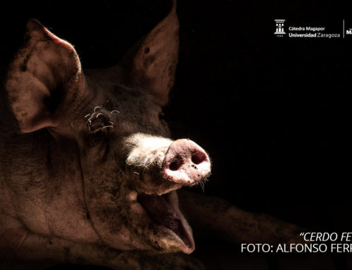 "WINNERS OF THE PHOTOGRAPHY CONTEST ""JUST FOR PIGS"""